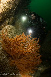 Coningbeg Sea Fan