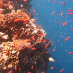 Red Sea 2014 021